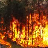 Skog som brinner